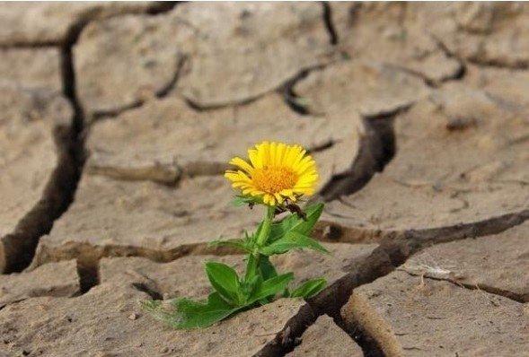 Donde Dios te sembró es preciso florecer
